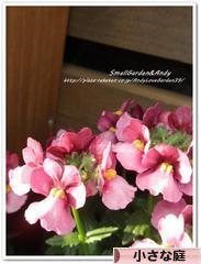 にほんブログ村 花ブログ 小さな庭へ