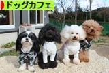 にほんブログ村 犬ブログ ドッグカフェへ