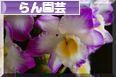 にほんブログ村 花・園芸ブログ 蘭園芸(らん)へ