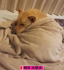 にほんブログ村 犬ブログ MIX大型犬へ