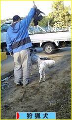 にほんブログ村 犬ブログ 狩猟犬へ