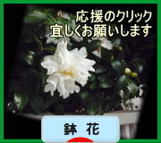 にほんブログ村 花・園芸ブログ 鉢花へ