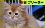 にほんブログ村 猫ブログ 猫 ブリーダーへ