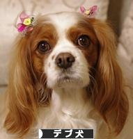にほんブログ村 犬ブログ デブ犬へ