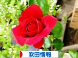 にほんブログ村 地域生活(街) 関西ブログ 吹田情報へ