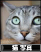 まったく気付いていませんでした。  にほんブログ村 猫ブログ 猫 写真へ