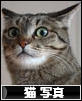 ハチさんにあやまってくれないかちら! にほんブログ村 猫ブログ 猫 写真へ