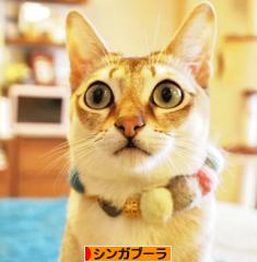 にほんhttp://ameblo.jp/nekodesu39/村 猫ブログ シンガプーラへ