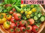 にほんブログ村 花ブログ 屋上・ベランダ菜園へ