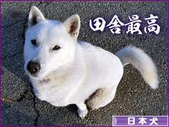 にほんブログ村 犬ブログ その他日本犬へ