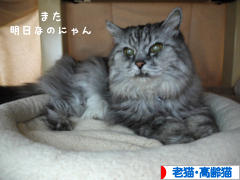 にほんブログ村 猫ブログ 老猫・高齢猫へ