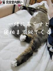 にほんブログ村 猫ブログ 猫 完全室内飼いへ