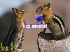 にほんブログ村 恋愛ブログ 恋愛・結婚の豆知識へ