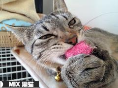 にほんブログ村 猫ブログ MIX黒猫へ