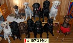 にほんブログ村 犬ブログ 犬 多頭飼い(10匹以上)へ