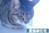 にほんブログ村 住まいブログ 愛猫家住宅へ