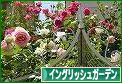 にほんブログ村 花・園芸ブログ イングリッシュガーデンへ