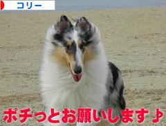 にほんブログ村 犬ブログ コリーへ