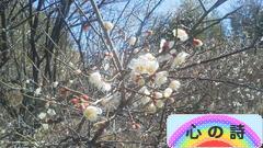 泡沫(うたかた)の花 (1)