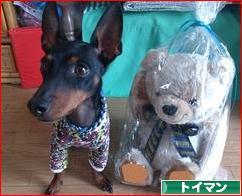 にほんブログ村 犬ブログ トイ・マンチェスター・テリアへ