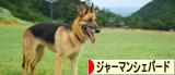 にほんブログ村 犬ブログ ジャーマンシェパードへ