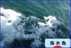 にほんブログ村 観賞魚ブログ 海水魚へ