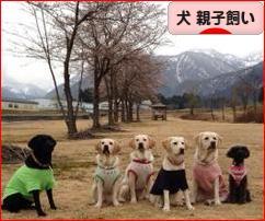 にほんブログ村 犬ブログ 犬 親子飼いへ