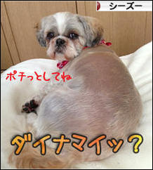 にほんブログ村 犬ブログ シーズーへ