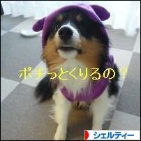 にほんブログ村 犬ブログ シェルティー     へ