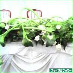 にほんブログ村 花・園芸ブログ ブライダルフラワーへ