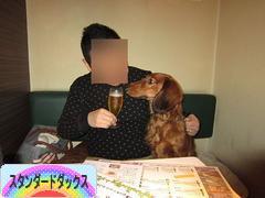 にほんブログ村 犬ブログ スタンダードダックスフンドへ
