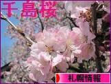 にほんブログ村 地域生活(街) 北海道ブログ 札幌情報へ