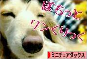 にほんブロ グ村 犬ブログ ミニチュアダックスフンドへ