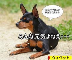 にほんブログ村 犬ブログ ウィペットへ