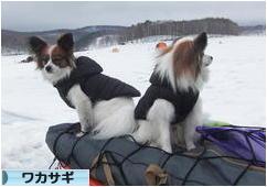 にほんブログ村 釣りブログ ワカサギ釣りへ