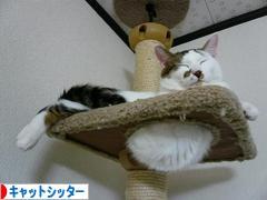 にほんブログ村 猫ブログ キャットシッターへ