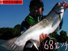 にほんブログ村 釣りブログ サクラマス釣りへ