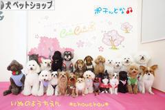 にほんブログ村 犬ブログ 犬 ペットショップへ