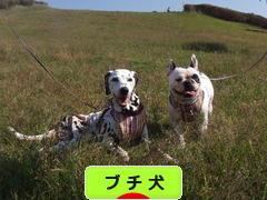 にほんブログ村 犬ブログ ブチ犬へ