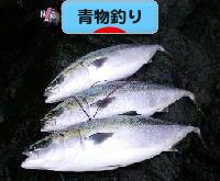 にほんブログ村 釣りブログ 青物釣りへ