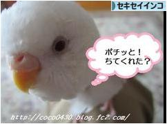 にほんブログ村 鳥ブログ セキセイインコへ