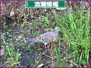 にほんブログ村 地域生活(街) 東京ブログ 清瀬情報へ