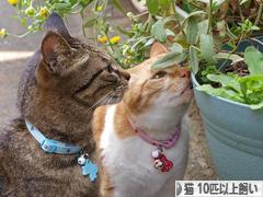 にほんブログ村 猫ブログ 猫 多頭飼い(10匹以上)へ