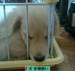 にほんブログ 村 犬ブログ 犬 多種飼い(多犬種飼い)へ