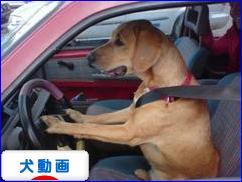 にほんブログ村 犬ブログ 犬動画へ