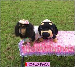 にほんブログ村 犬ブログ ミニ チュアダックスフンドへ