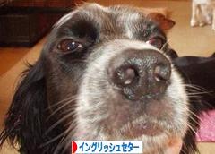 """align=""""left""""alt=""""にほんブログ村"""