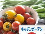 にほんブログ村 花ブログ ポタジェ・キッチンガーデンへ