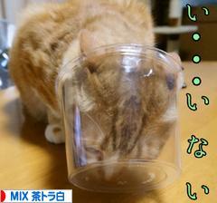 にほんブログ村 猫ブログ MIX茶トラ白猫へ
