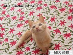 にほんブログ村 猫ブログ MIX茶猫へ